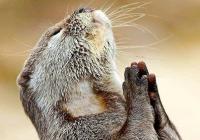 Modlitba k Ficovi