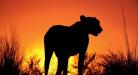 Ako písať o Afrike