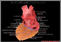 """Operácia srdca bez otvorenia hrudníka alebo ako fungujú """"umelé"""" chlopne ?"""