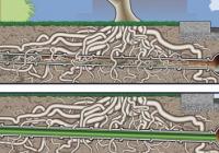 Korene v kanalizácii: Ako sa vyhnúť problému a vybrať správnu metódu opravy