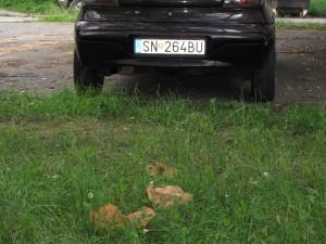 Rovno pred autom (KK)