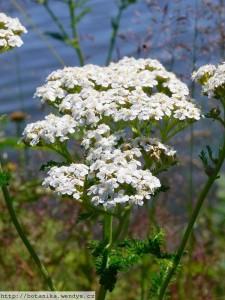 rebríček krásny pohľad na biele kvety